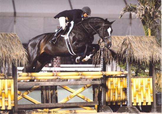 COMPONIST - photo de nuit - Palm Beach 2011